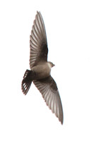 Crag Martin Nov 2015 - Chesterfield