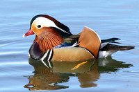 Mandarin, male